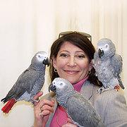 Мужчины и женщины говорили африканских попугаев серый на продажу