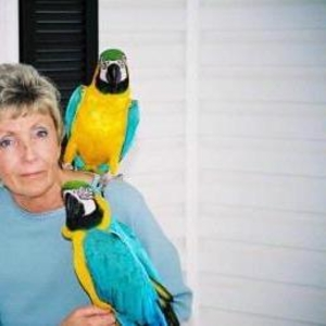 Хорошо обученные попугаи ара говорить