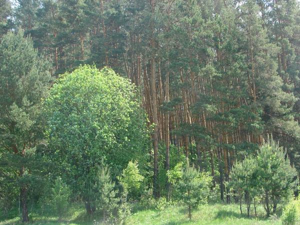 Продаётся земля в с. Богимово Калужская область 2